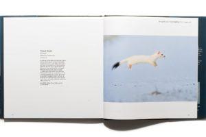 Press – Etienne Francey