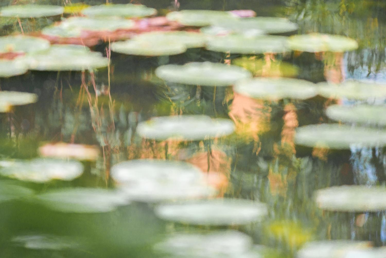 Reflets de végétaux