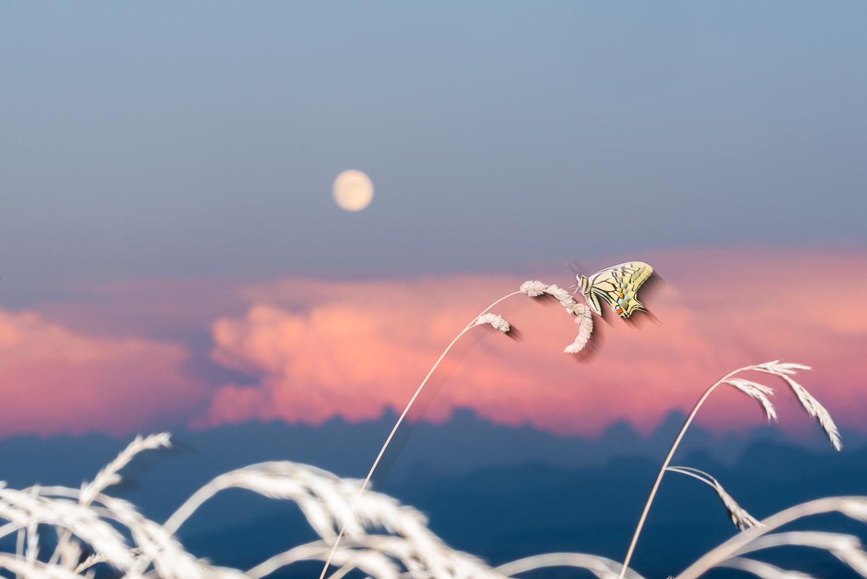 Machaon et lever de lune