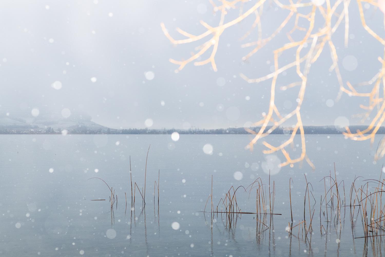 Lac de Morat sous la neige